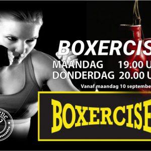 boxercise-web